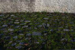 Stony mossy pavement Royalty Free Stock Image