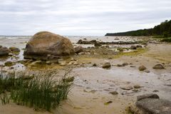 stony na plaży Fotografia Royalty Free