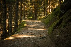 A stony path in a dark forest. Gentle sunlight between the trees. stock image