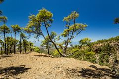 Stony path surrounded by pine trees at sunny day. Clear blue sky and some clouds along the horizon line. Rocky tracking road in stock image