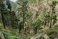 Stony path at upland surrounded by pine trees at sunny day. The slopes of a narrow deep gorge covered with centuries-old pines. Rocky tracking road in mountain stock photography