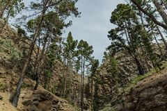 Stony path upland surrounded by pine trees at sunny day. The slopes of a narrow deep gorge covered with centuries-old pines. Rocky. Stony path at upland stock photos