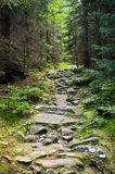 Stony path in the woods Stock Image