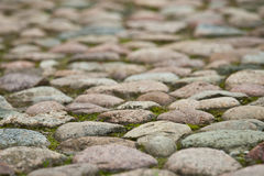 Stony pavement Stock Images
