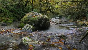 Stony Psaho river streams through the deep autumn box forest in Caucasus 4K. Shot in low light conditions stock footage