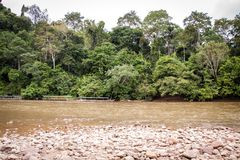 Stony river bed in a lush green jungle Royalty Free Stock Images