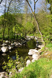 Stony river in the spring countryside Stock Photography