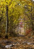 Stony road in the autumn forest Royalty Free Stock Photography