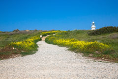 Stony road through the field with yellow flowers to the lighthou Stock Image