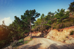The stony road in the mountains. Stock Image