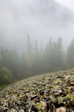 Stony slope in forested mountains through the fog. Stock Photos
