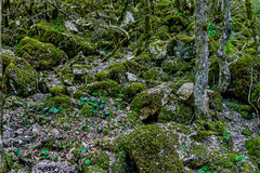 The stony slope. The stones covered with green moss are on the slope of the mountain Royalty Free Stock Images