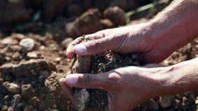 Stony Soil In Palms stock video