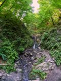 Stony stream in the summer forest. Waterfall in the forest royalty free stock photography