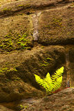 Stony wall with a fern Royalty Free Stock Images