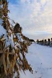 Stooked havrestjälk ställde upp i fältet på en fridsam afton i snön royaltyfri fotografi