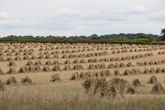 Stooks в поле Стоковые Изображения RF