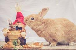 Stoot het Rufus gekleurde konijn de decoratie van de dalingsvogelverschrikker aan royalty-vrije stock foto's