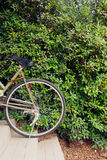 Stop bike at green leaves wall Royalty Free Stock Images