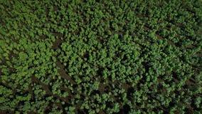 Stop Deforestation stock footage