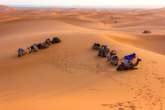 Stop in the desert. Relaxation for the ships of the desert stock photos