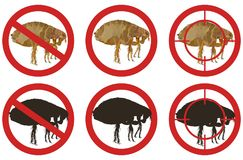 Stop flea signs. Set of insect pest control signs. Vector illustration. Royalty Free Stock Photography