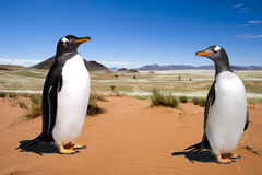 Stop Global Warming - Penguin Habitat - Two Penuins Living In Desert &x28;of Namibia&x29; Stock Photography