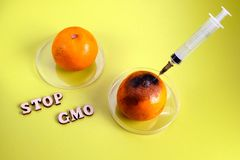 Stop GMO. Genetic engineering. Gene changes in citrus. Live and moldy tangerine with a syringe. Background of lemon color royalty free stock photos
