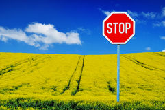 Stop growing canola royalty free stock image