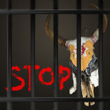Stop hurting animals Royalty Free Stock Image
