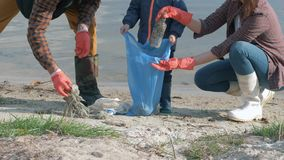 Stop plastic, young family with little child boy in rubber gloves collects trash in garbage bag while cleaning dirty. Beach close up stock footage