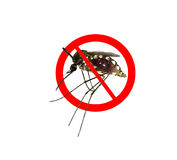 Stop/ Prohibit sign on mosquito Royalty Free Stock Photography