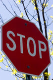 Stop Sign. On a blue sky background with tree branches Royalty Free Stock Photos