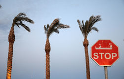 Stop sign on a background of palm tree Stock Images