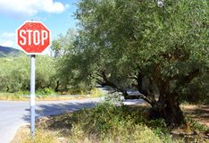 Stop sign and olive tree Stock Photo