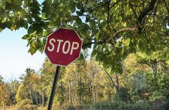 Stop sign under tree limb Stock Images