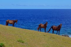 Stop and stare. Uyugan wild horses... stop and stare Stock Photo