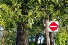 Stop for the trees Royalty Free Stock Photos