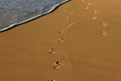 Stopa druki w plażowych piaskach Zdjęcia Royalty Free