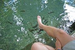 Stopa w rybim nożnym zdroju zdjęcia stock