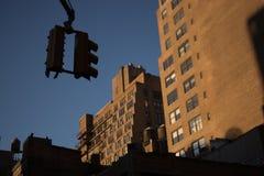 Stoppa ljus i Manhattan Royaltyfria Bilder