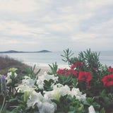 Stoppa och lukter blommorna Royaltyfri Foto
