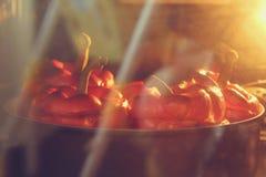 stoppad pepparred Royaltyfria Bilder