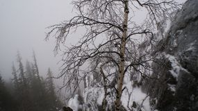 Stopparen i dimman arkivfoton