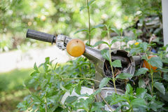 Stopped motorcycle in jungle covered by leaves of climbing plant Stock Photography
