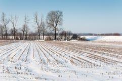 Stoppelfeld vom Silagemais abgedeckt mit Schnee Lizenzfreies Stockbild