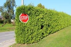 Stoppen Sie das Verkehrsschild, das am hohen Metallpfosten am Ende der sehr dichten hellgrünen Hecke angebracht wird, die mit Gra lizenzfreie stockbilder