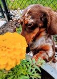 Stoppen Sie, um die Blumen zu riechen stockbilder