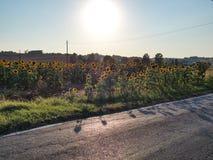 Stoppen Sie zwischen Sonnenblumen Lizenzfreie Stockbilder