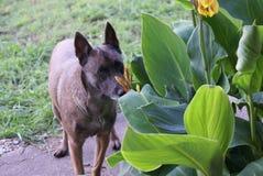 Stoppen, zum der Blumen zu riechen Lizenzfreies Stockbild